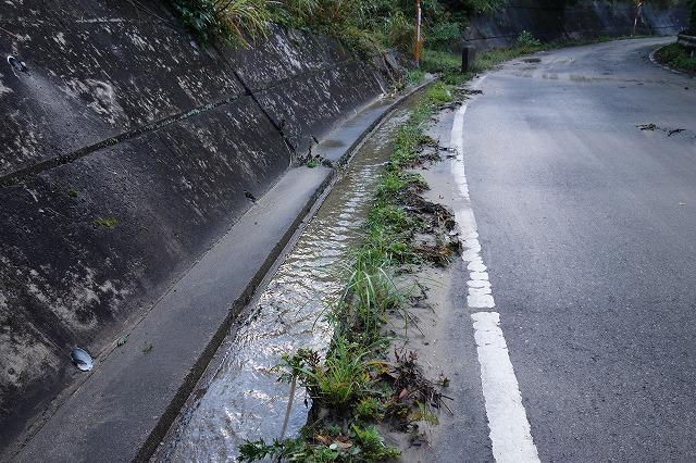 上流から流れてきた土砂が道路横の側溝を埋めています 増水すると道路上に流れ出そうです