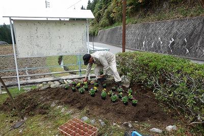 花を植えます。この花壇は何年も前に町内の中学性が花をうえていました。土つくりをすると雑草からあっという間に花壇に変わりました。花の大きくなるのがたのしみです