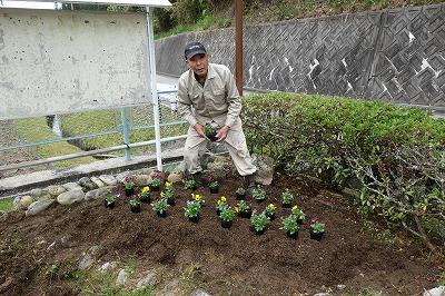 植え付けの手際のよいこと。あっという間に花壇を花か覆います。