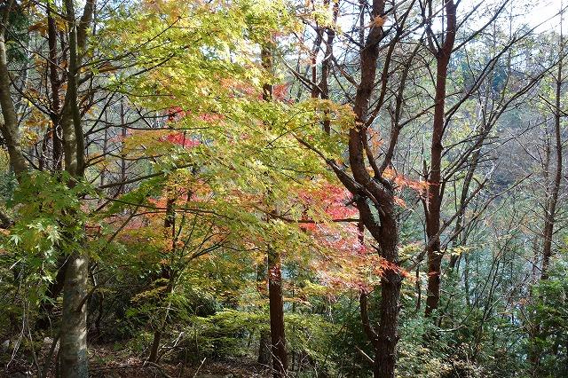 ダム周辺の紅葉です 静かなたたずまいは 疲れたた心を癒してくれます 自然の姿の紅葉をゆっくりお楽しみください