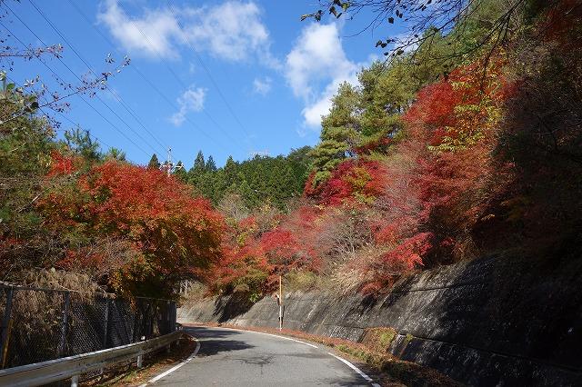 ダム周辺にはもみじの木があり自然の姿で目を楽しませてくれます